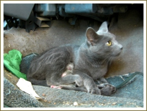 Ghost chose to give birth to her premature kitten on the passenger floorboard of the truck.